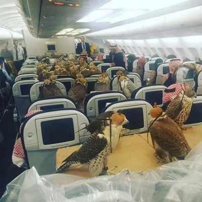 Саудовский принц для восьмидесяти соколов купил по авиабилету